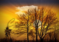 Sunset (29)