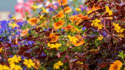 Flowers, Nature (5)