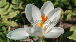 Flowers, Nature (15)