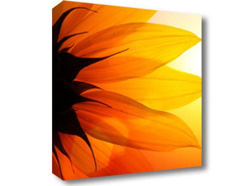 Square Canvas