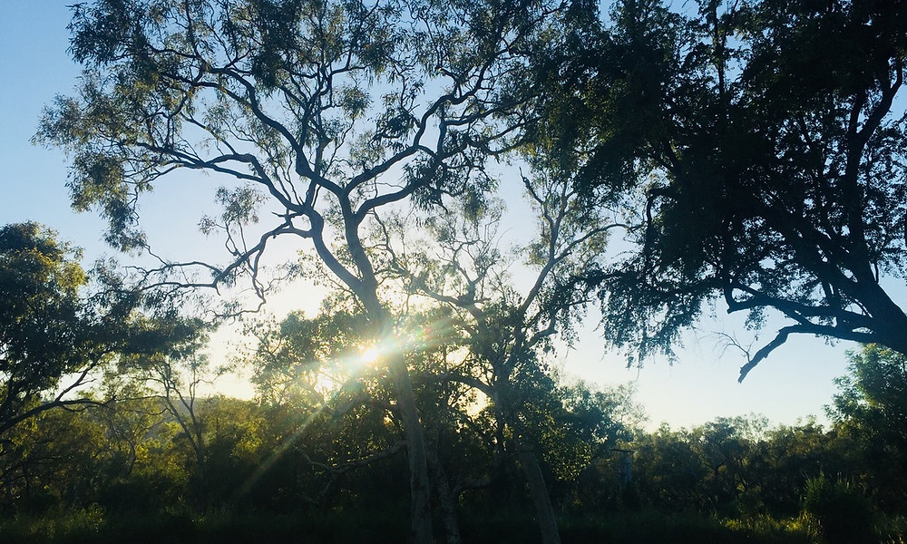 View from our tent in Adelaide River NT