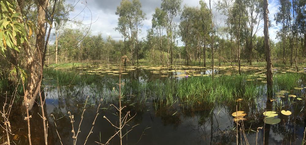Emmas lilly pond