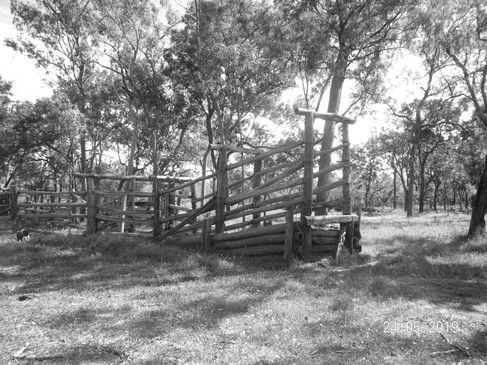 Cattle Yards