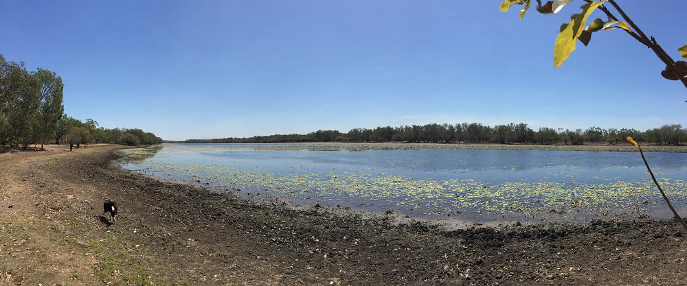 Teeming with birdlife, couldn't see any crocs though