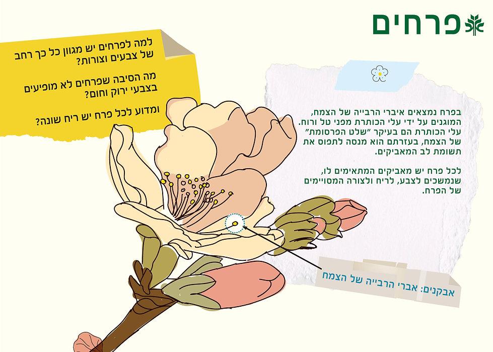 פרחים (1)-page-001.jpg
