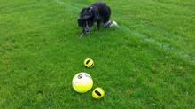 Zabawa z psem, ważna jak trening!