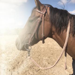 Makramee Pferdestrick mit Panikhaken