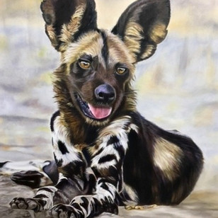 Young Wild Dog
