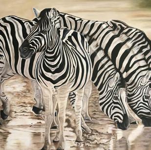4 Zebras Drinking