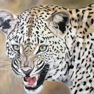 Leopard Snarling