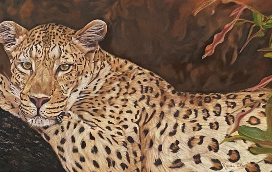 Leopard in tree (framed)