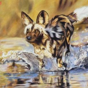 Wild Dog Hunting in Water