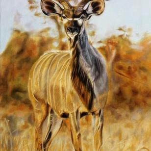 Kudu Bull Standing