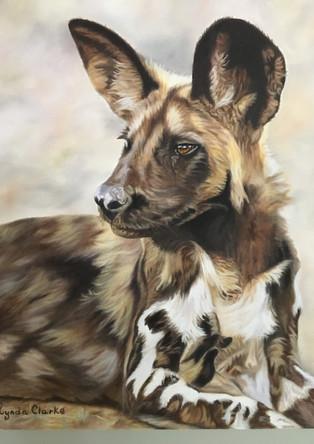 Wild Dog Head