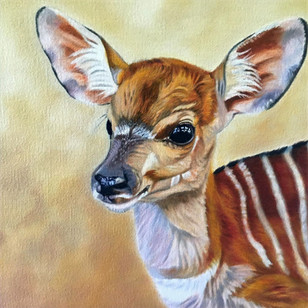 Nyala fawn (Frame Included)