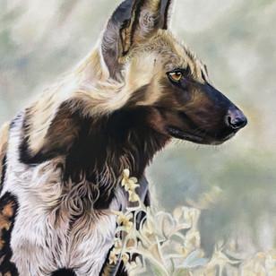 Wild Dog in Veld