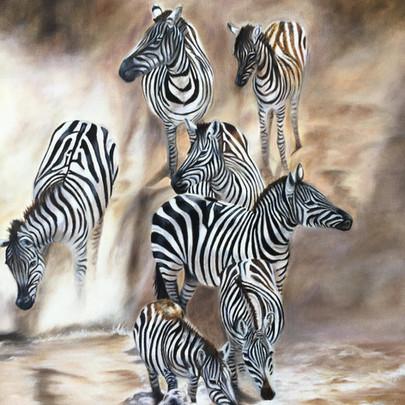 Zebra coming down Bank