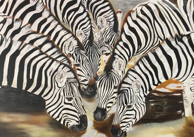 7 Zebras drinking