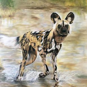 Wild Dog in Water