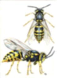 Whitehead_Rachael_Hornet Wasp_2013.jpg