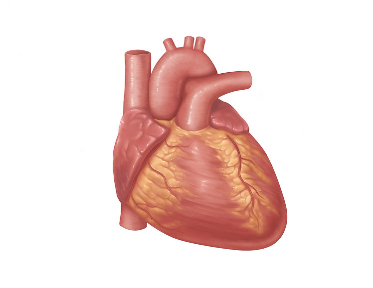 Heart_Illustration.jpg