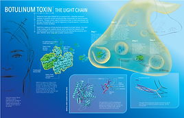 Botulinum_Toxin_V01.png