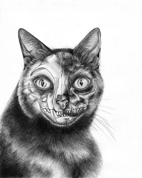 6. Domestic Cat Skull_2.jpg