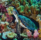greg_asner_spratly_islands_5806.jpg