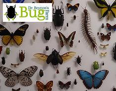 Dr Beynon's Bug Farm, Pembrokeshire