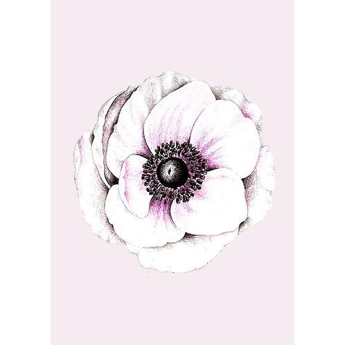 Postkarte Anemone rose