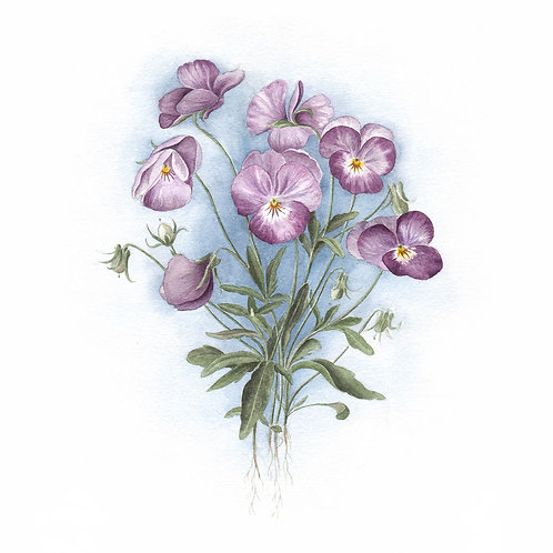 Postkarte Bouquet Stiefmütterchen