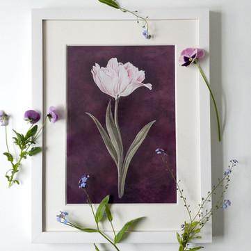 Tulpe gerahmt