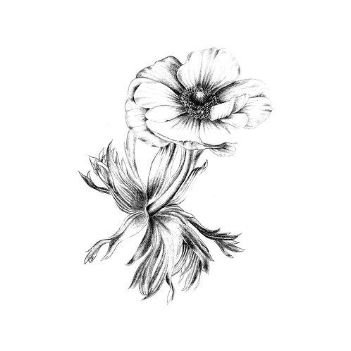 Postkarte Anemone schwarz-weiß