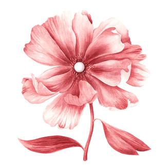 Blume JJ