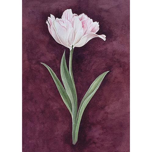 Postkarte Tulpe