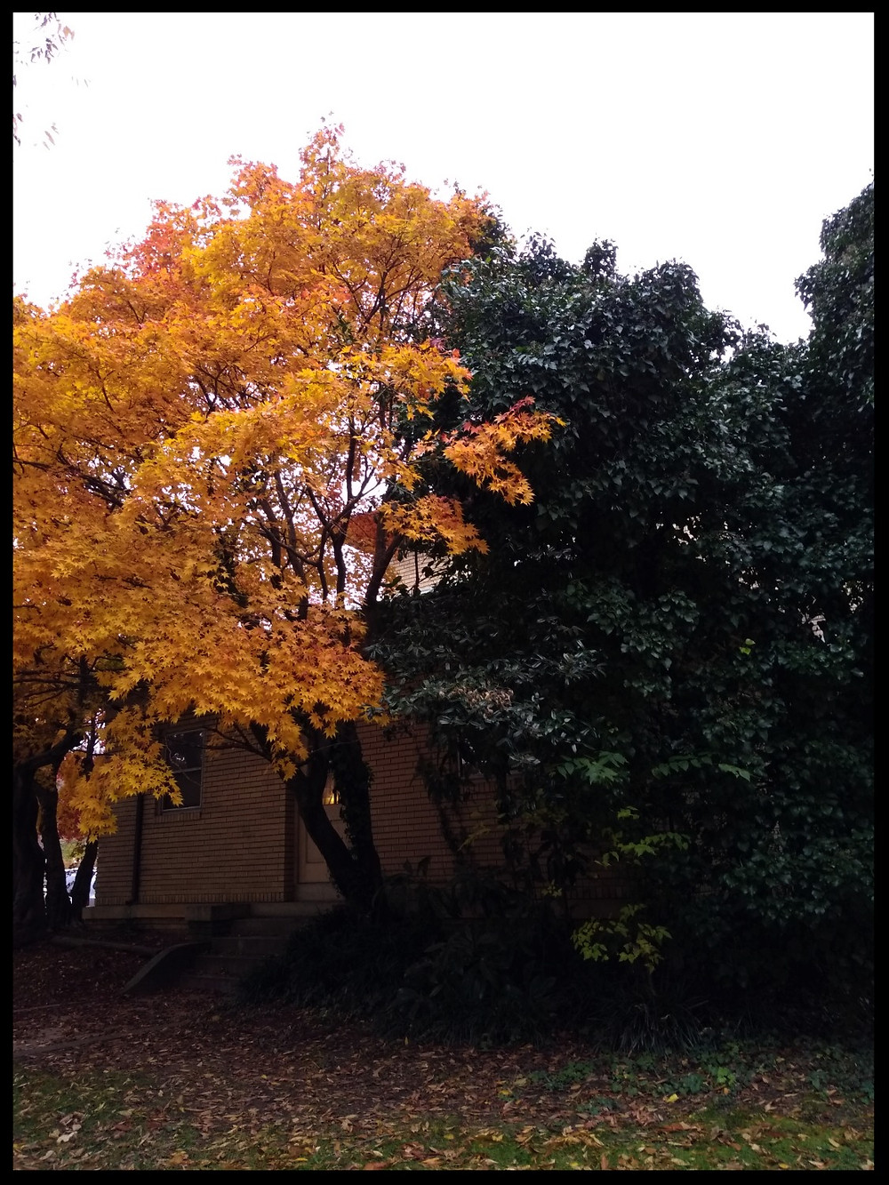 The trees are beautiful here. These two next to each other provided a great contrast of colors.