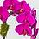 Thumbnail: Purple Phalaenopsis Orchid Plant