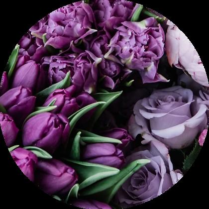 Freestyle - Purple Tones
