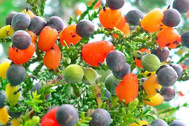 Sam-Van-Aken-Tree-of-40-Fruit-1020x530.j