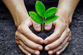 planting-trees-1100x641.jpg