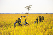 Rustic-Cycling-Routes.jpg