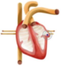 watchman_dtp_heart_illustration_desktop.