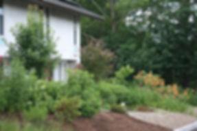 veteran's garden in bloom