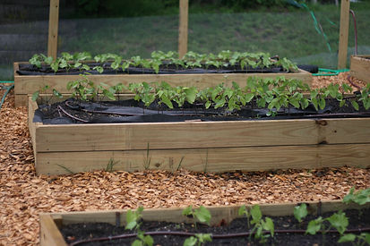 community farm sprouting
