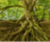 wos 2019 tree small.jpg