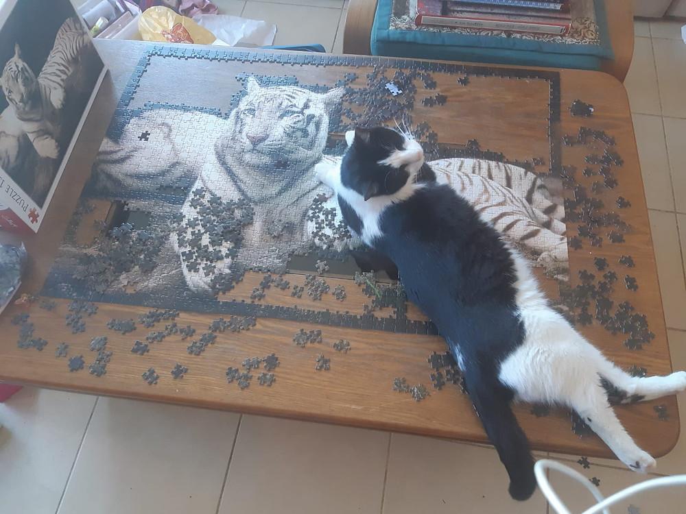 סטיבי, החתול העיוור, שוכב על הטיגריס בפאזל
