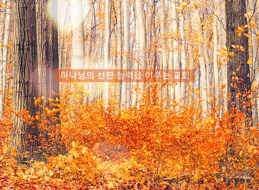 Fall is burning leaves;__and there goes summers heat —__I will carry the warmth inside_edited_edited.jpg
