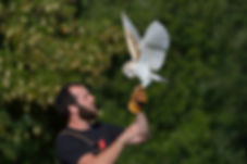 Jimmi Hill and Pan the barn owl - international centre for birds of prey (ICBP)