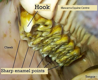 IEC Dental 5a.jpg