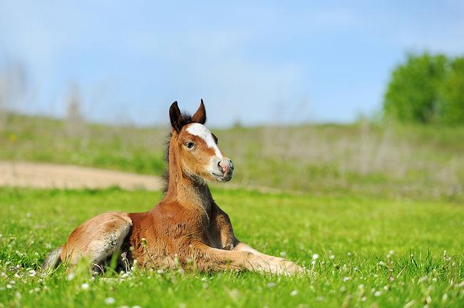 IEC Foal.jpg